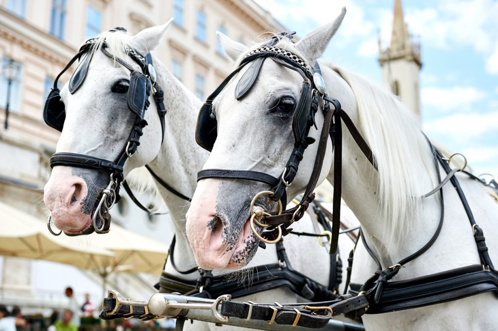 Take a Horse and Buggy Tour in the Olde Town Carriage Tour!
